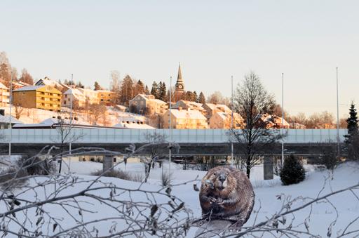 Bäverbo vid Botniabanan. Foto © Anders Byström http://suzanders.se